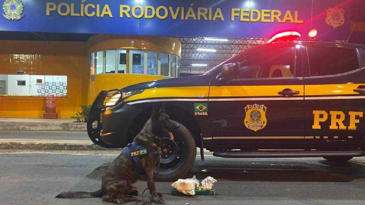 Droga apreendida pela PRF. Foto: Divulgação